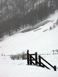 Free Bird On The Snow Stock Photography - 5491952
