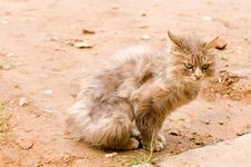 A Cat In A Farm Of Beijing Royalty Free Stock Image