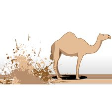 Free Camel Near Grunge Stock Photos - 5492753