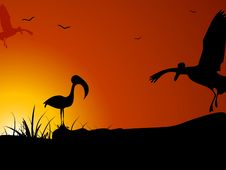 Crane And Crow Royalty Free Stock Image