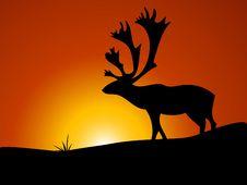 Free Reindeer Wandering Stock Photography - 5492772