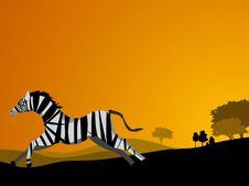 Free Zebra Run Stock Images - 5492784