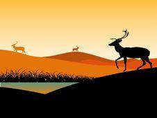 Free Reindeer Near Water Stock Image - 5492791