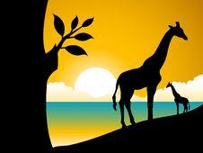 Free Giraffe And Tree Royalty Free Stock Image - 5492796