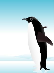 Free Penguin In Ice Royalty Free Stock Images - 5492809
