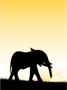 Free Elephant Stock Photography - 5492812