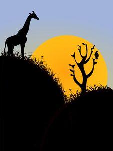 Free Giraffe On Height Royalty Free Stock Photography - 5492907