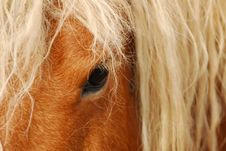 Free Draught Horse Stock Image - 5493221