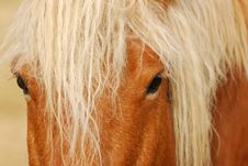 Free Draught Horse Stock Photography - 5493232
