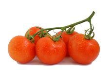 Free Drops On Tomatoes Royalty Free Stock Photography - 5494687
