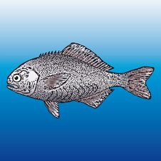 Free Fish (vector) Royalty Free Stock Photo - 5496905