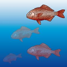 Free Fish (vector) Stock Photo - 5496930