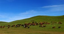 Free Horses On Grasslands Royalty Free Stock Photos - 5497208