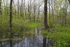 Free Cowles Bog In The Spring Stock Image - 5497811