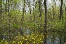 Free Yellow Flowers In Cowles Bog Stock Images - 5497884