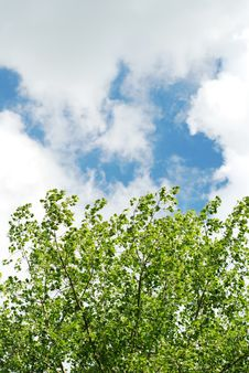 Free Sky And Leafs Stock Images - 5499034