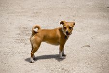 Free A Little Dog On The Road Royalty Free Stock Image - 5499586