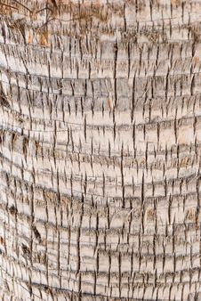 Bark Of A Tree-palm Bark Structure Stock Photography
