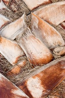 Bark Of A Tree-palm Bark Structure Stock Images
