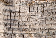 Bark Of A Tree-palm Bark Structure Stock Photos
