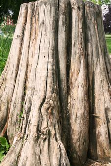 Free Tree Trunk Stock Images - 5499604