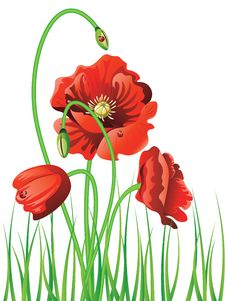 Free Poppy With Grass Royalty Free Stock Image - 54979656