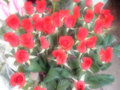 Free A  Bunch Of Red Roses Stock Photography - 559632