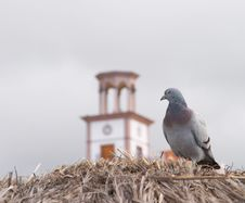 Free Pigeon Looking At The Clock On The Building Stock Photos - 550383