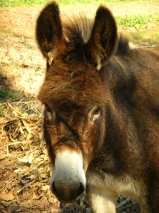Free Donkey Face Royalty Free Stock Photos - 550628