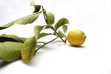 Free Lemon4897 Stock Photo - 551410