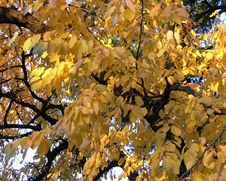 Free Autumn Leaves Stock Photography - 551792