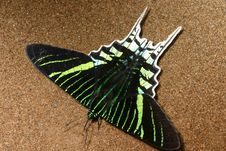 Free Urania Butterfly Stock Photo - 551870