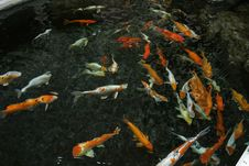 Free The Koi Pond Stock Photo - 552880
