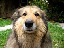 Free Dog Smile Royalty Free Stock Photography - 553037