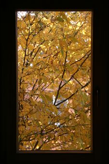Free Autumnal Window Stock Image - 553081