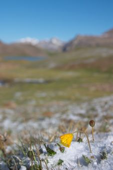 Free Mountain Meadow In The Morning After Heavy Snow 2 Royalty Free Stock Photo - 553595