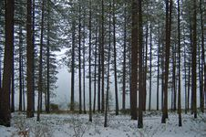 Winter Afternoon Royalty Free Stock Photography
