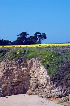 Free Springtime Coastal Meadow Stock Photography - 553942