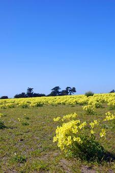 Free Springtime Coastal Meadow Stock Photos - 553943