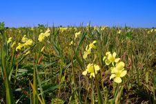 Free Springtime Coastal Meadow Stock Photo - 553960