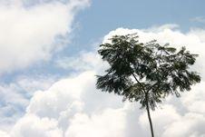 Free Tree Stock Photos - 555293