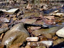 Free Rocks In A Creek Stock Images - 555574