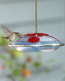 Free Humming Bird Royalty Free Stock Photography - 555737