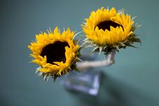 Free Sunflowers In Vase Stock Image - 555751
