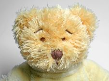 Free Teddy Bear Stock Image - 556211