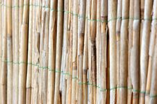 Free Bamboo Stock Images - 556914