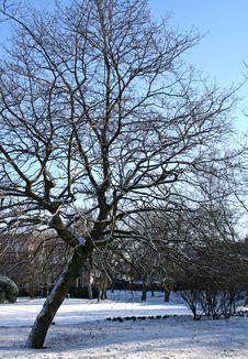 Free Snow Stock Photos - 557043