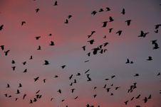 Free Vanilla Sky Stock Photo - 557080