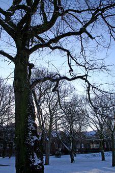 Free Snow Stock Photo - 557210