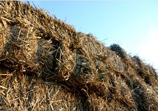 Free Hay Wagon Royalty Free Stock Photos - 557268